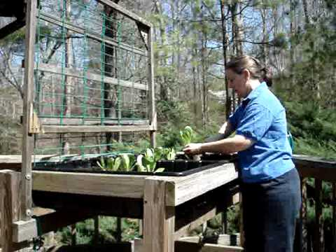 Gardening in a Waist High Raised Bed Garden