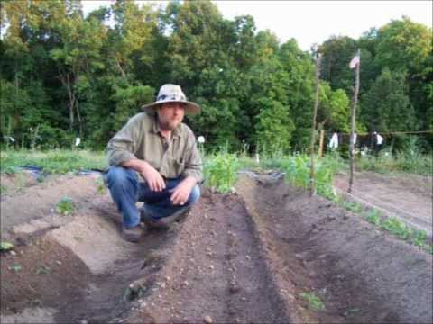 Raised Beds And Staggered Plantings – Vegetable Gardening