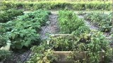 Raised Bed and Container Gardening