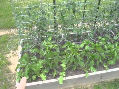 Garden Update #2 – Square Foot Gardening Raised Bed Vegetable Raw Food Garden Harvest