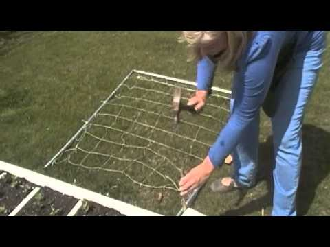 Square Foot Gardening 101: Growing Peas using a Trellis