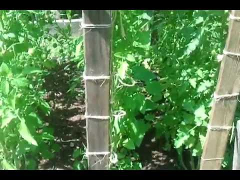 My Square Foot Garden Tour, August 24, 2012.mp4