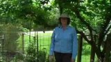 How to Raise Organic Vegetables : Organic Garden Pest Control Tips