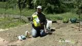 Organic Gardening – Pest Control