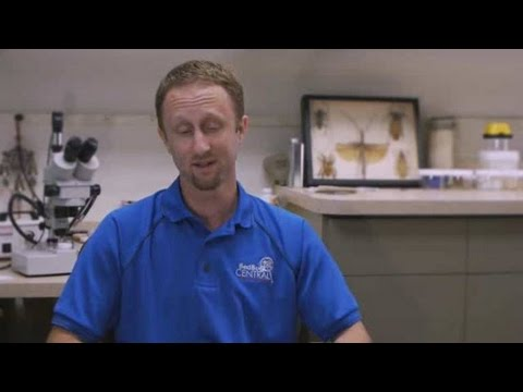 Pest Control: How to Get Rid of Garden Pests