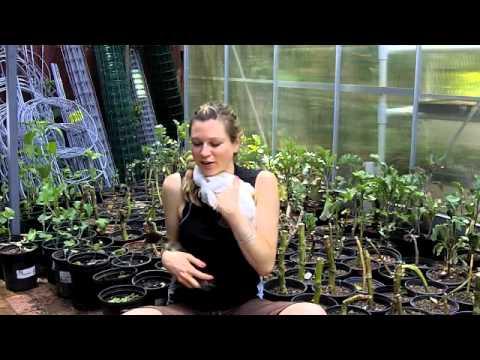 a surprising natural pest control for edible garden estates: ducks!