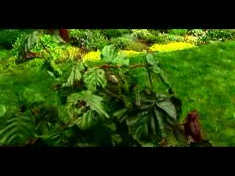 How to Design a Perennial Garden : Pest Control in a Perennial Garden