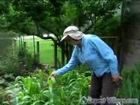 How to Raise Organic Vegetables : Designing an Organic Garden