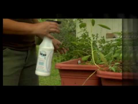 Organic Garden Pest Spray