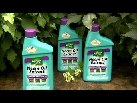 Using Neem Oil To Protect against Garden Pests