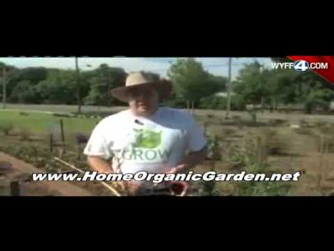 Organic Garden Pest Control – The 5 Best Tips to Keep Your Garden Bug Free Without Strong Chemicals