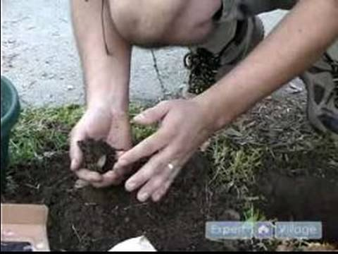 How to Care for Azaleas : How to Prepare the Soil for Azaleas