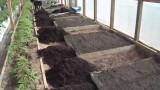 Greenhouse Raised Bed Preparation