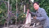 Best Way to Enrich Your Garden Soil to Grow Bigger and Better Vegetables