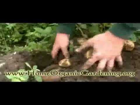 Organic Gardening: How to grow an organic vegetable garden.flv