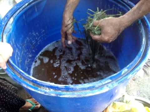 MAKING ORGANIC FOLIAR FERTILIZER