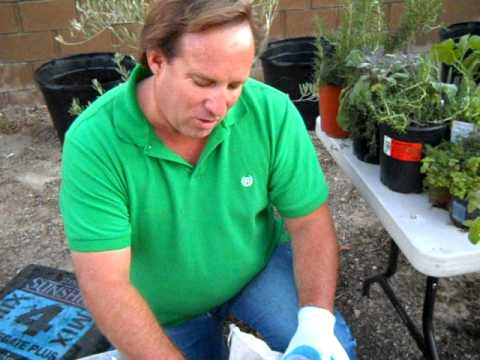 Container Gardening Organic Fertilizers