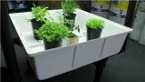 Growing Herbs : Hydroponic Vegetable & Herb Growing
