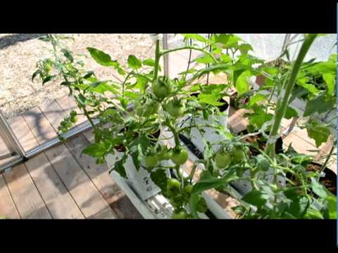 Organic vegetable growing solution – complete greenhouse kit
