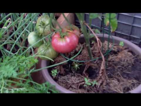 Terry's Square Foot Organic Vegetable Garden Part 6