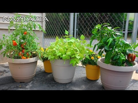 Container gardening desert garden care part 5 - Container gardening basics ...