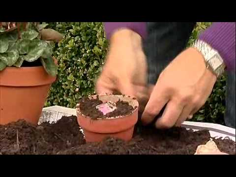 Alan Titchmarsh – Container Gardening