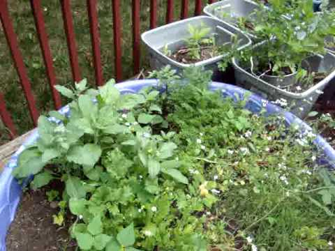 Suburban Container Gardening