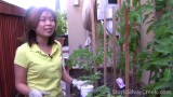 Vegetable Gardening #1: Organic Fertilizer
