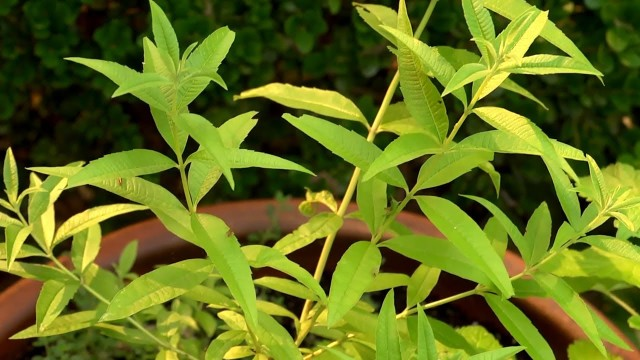 How to Grow Herbs in Small Spaces | At Home With P. Allen Smith
