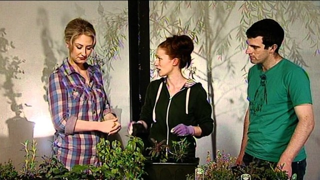 Growing Herbs – How to Plant Herbs in a Window Box