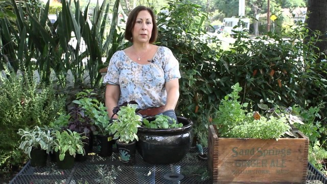How to Plant Basil Plants : Planting Herbs