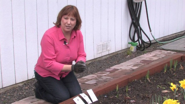 Gardening: Caring for Plants : How to Plant a Small Organic Vegetable Garden