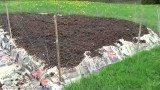 Progress In My Organic Vegetable Garden