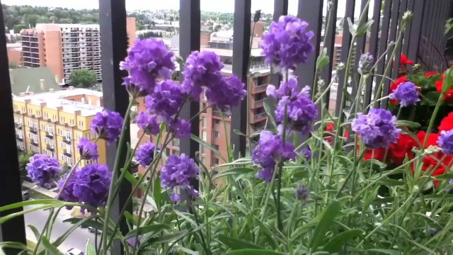 Sunday Afternoon in My Balcony Container Garden