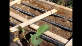 How to Plant Your Square Foot Garden