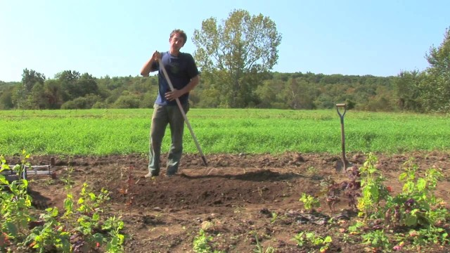 Vegetable Gardening : Growing Organic Vegetables in a Raised Bed Garden