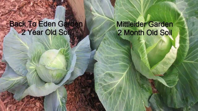 Important Plant Nutrition for Organic Vegetable Gardens