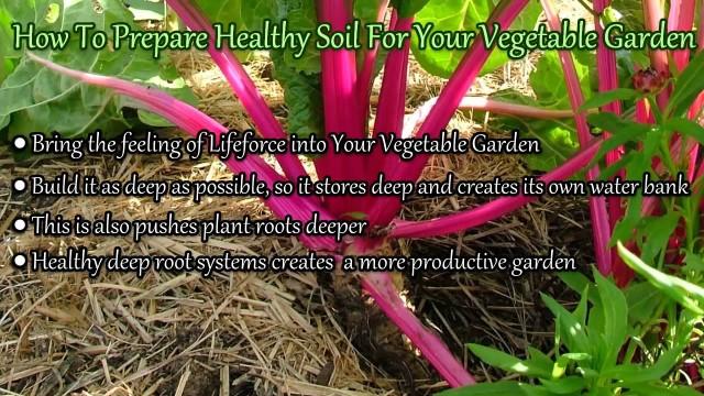 How To Prepare Healthy Soil For Your Vegetable Garden