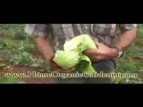 Organic Gardening For Beginners – Successful Steps To Organic Gardening