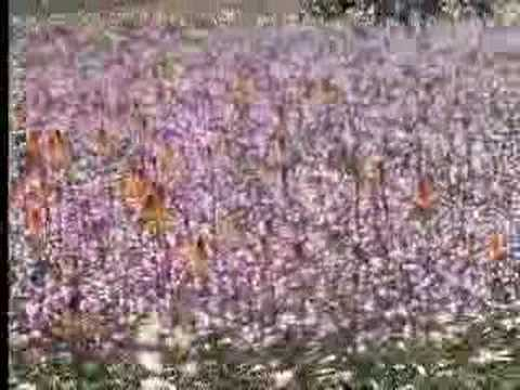 Plant growth of tropical flowers in the desert – David Attenborough – BBC wildlife