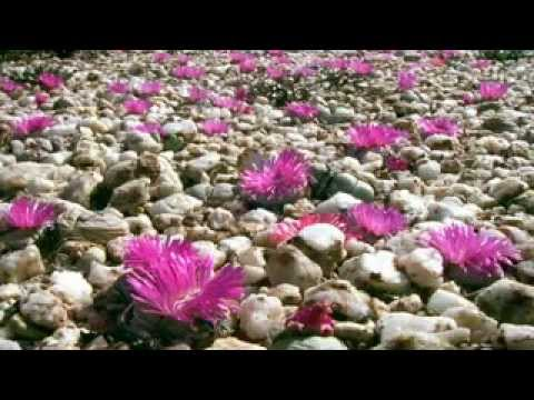 BBC Natural World Africas Desert Garden – Legendado pt