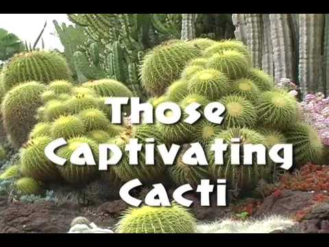 Those Captivating Cacti – A Sample