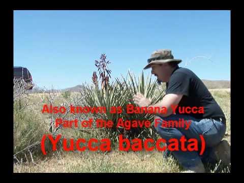More Desert Plants Part 1