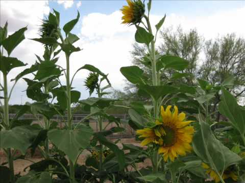 Organic Desert Gardening in Arizona