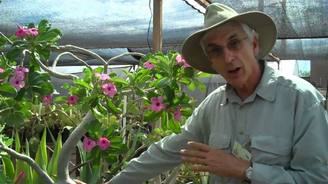 Caring for your Desert Rose (Adenium spp.).mp4