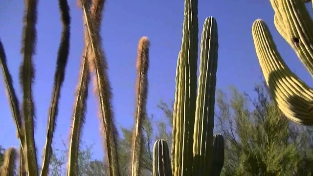 Desert Botanical Garden of Phoenix (HD)