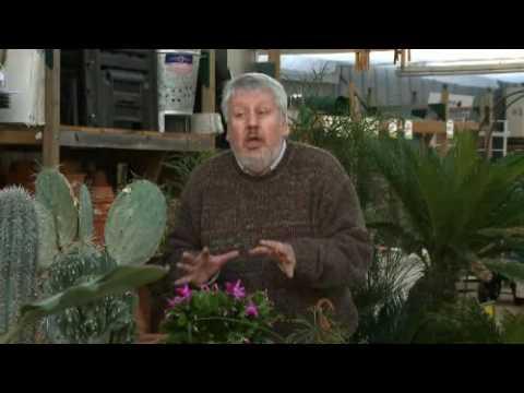 Secrets de Jardin : Les Cactus !