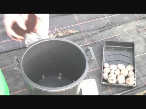 Allotment Diary April 9th Planting /  Growing Potatoes in Containers