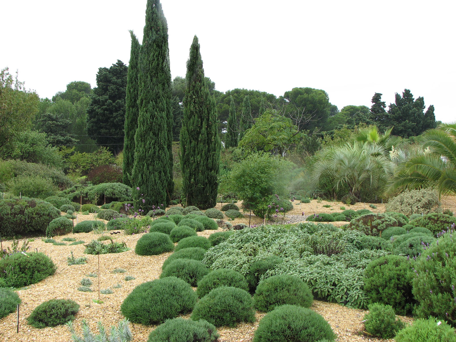 Xeriscape in france_by_Seán A. O'Hara