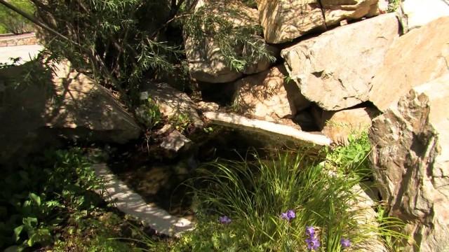 Water Garden, UTEP Centennial Museum Chihuahuan Desert Garden